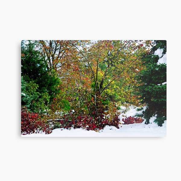 A Cacophony of Color Metal Print