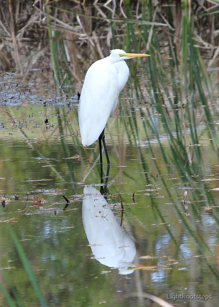 Egret Reflection by LightFootsteps