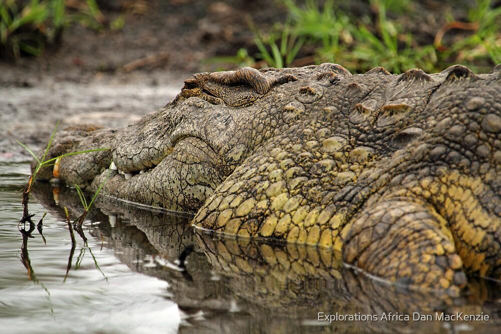 Nile crocodile by Explorations Africa Dan MacKenzie