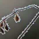 Diamond Necklace by Kasia Nowak