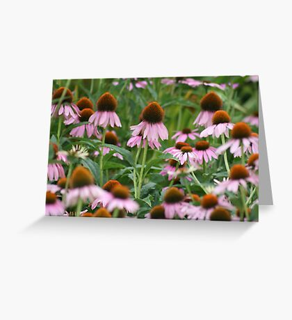 Her Majesty's Coneflowers (STATOU: CTheWorld) Greeting Card