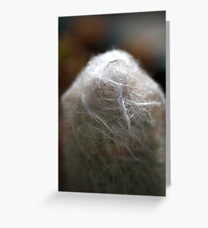 Hairy Cactus Greeting Card