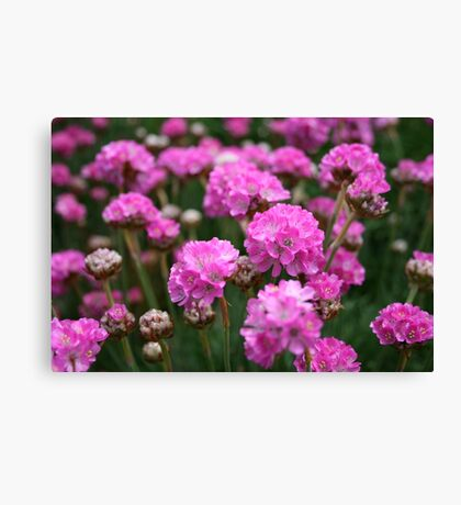 Flower bed in Yarmouth Canvas Print