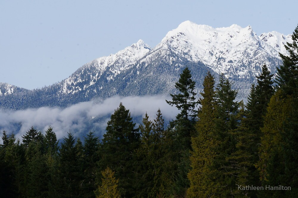Olympic National Forest January 1st 2013 by Rainydayphotos