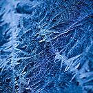 Icy Web. by Sherstin Schwartz