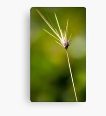 On the tip Canvas Print
