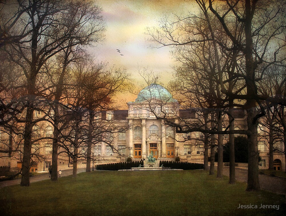 The Library by Jessica Jenney