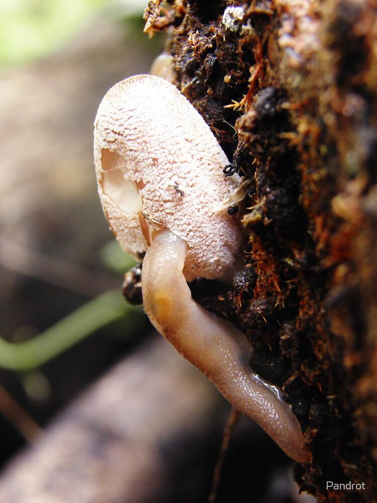 Slug eating Shroom by Pandrot