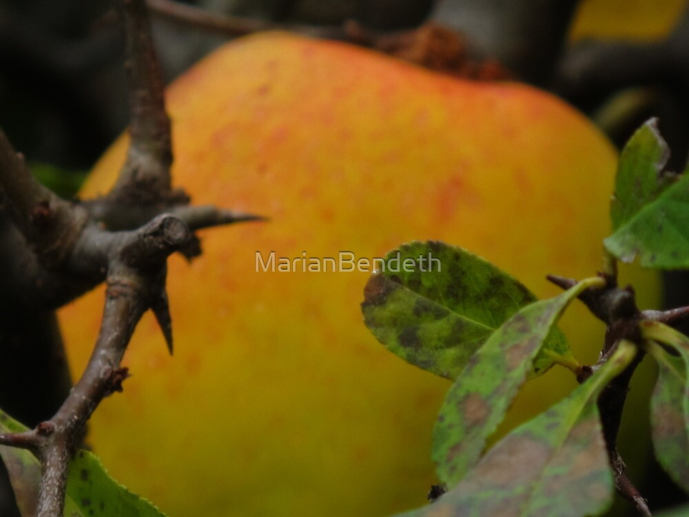 Ripe for the picking by MarianBendeth