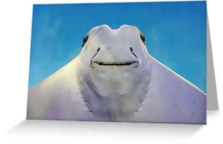 cownose ray by FLLETCHER