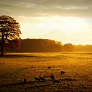 """""""GOLDEN LIGHT OF MORNING"""" by snapitnc"""