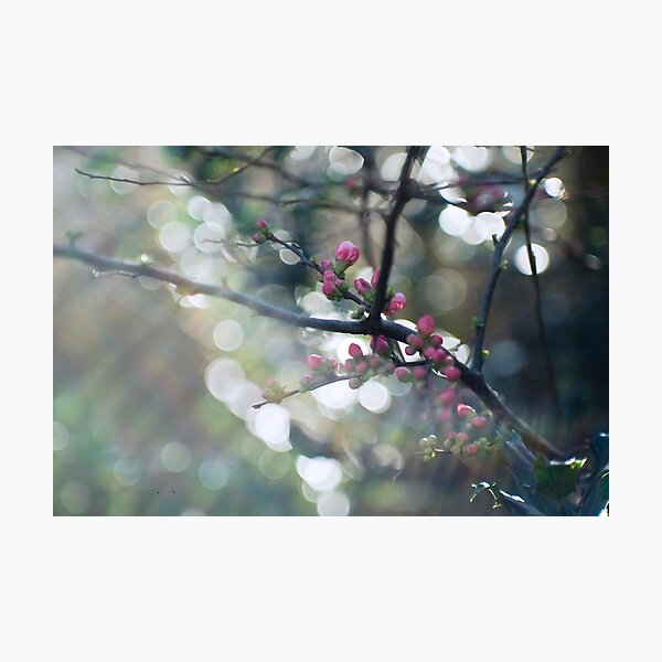 Blossom and bokeh Photographic Print