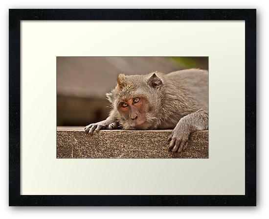 Macaques of Ulu Watu by Timo Balk