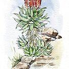 Aloe Ferox in meinem Garten von Maree Clarkson