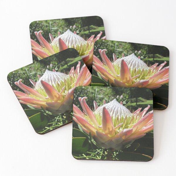 Protea Coasters (Set of 4)