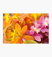 Pink and Orange Orchids Photographic Print