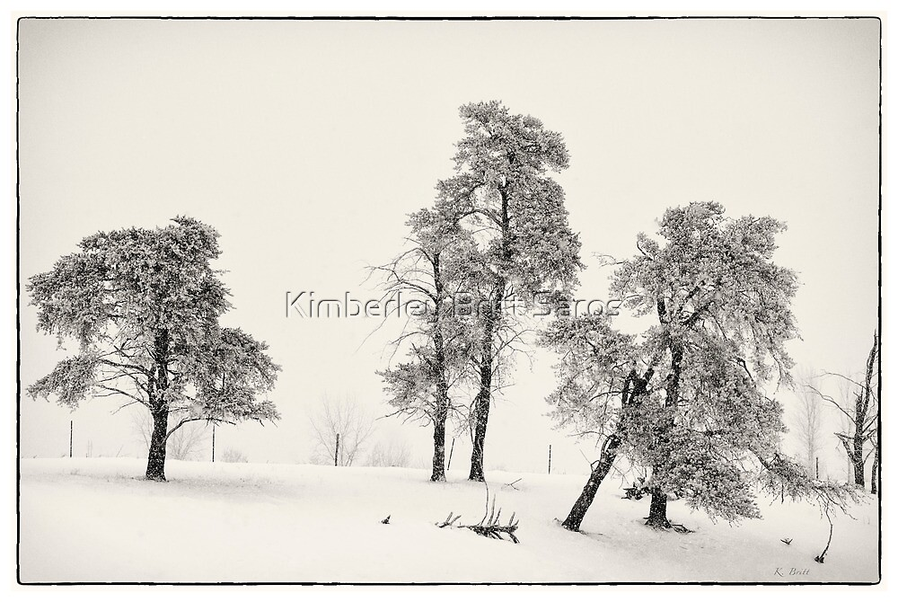 Winter Pines by KBritt