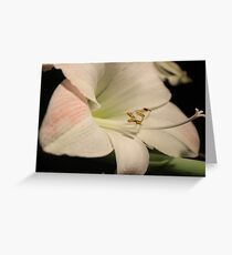 Fabulous Amaryllis Greeting Card