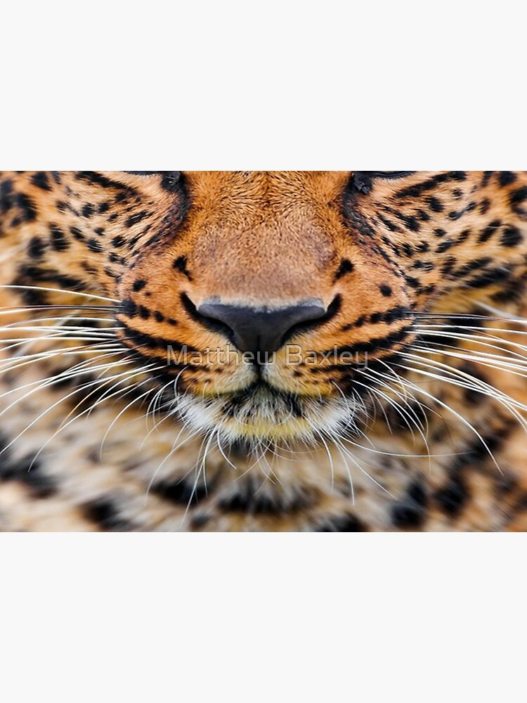 Leopard by maxxdesigns