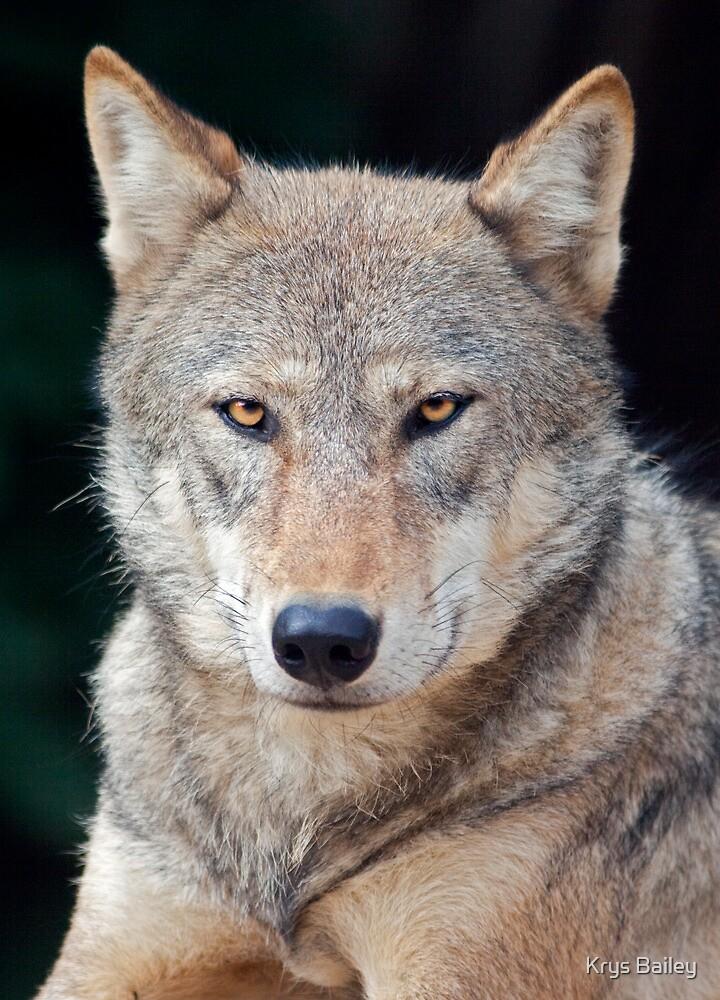 Grey Wolf by Krys Bailey