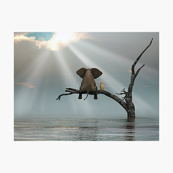 elephant and a dog are sitting on a tree Photographic Print