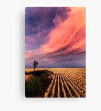 Taking the Long View Canvas Print