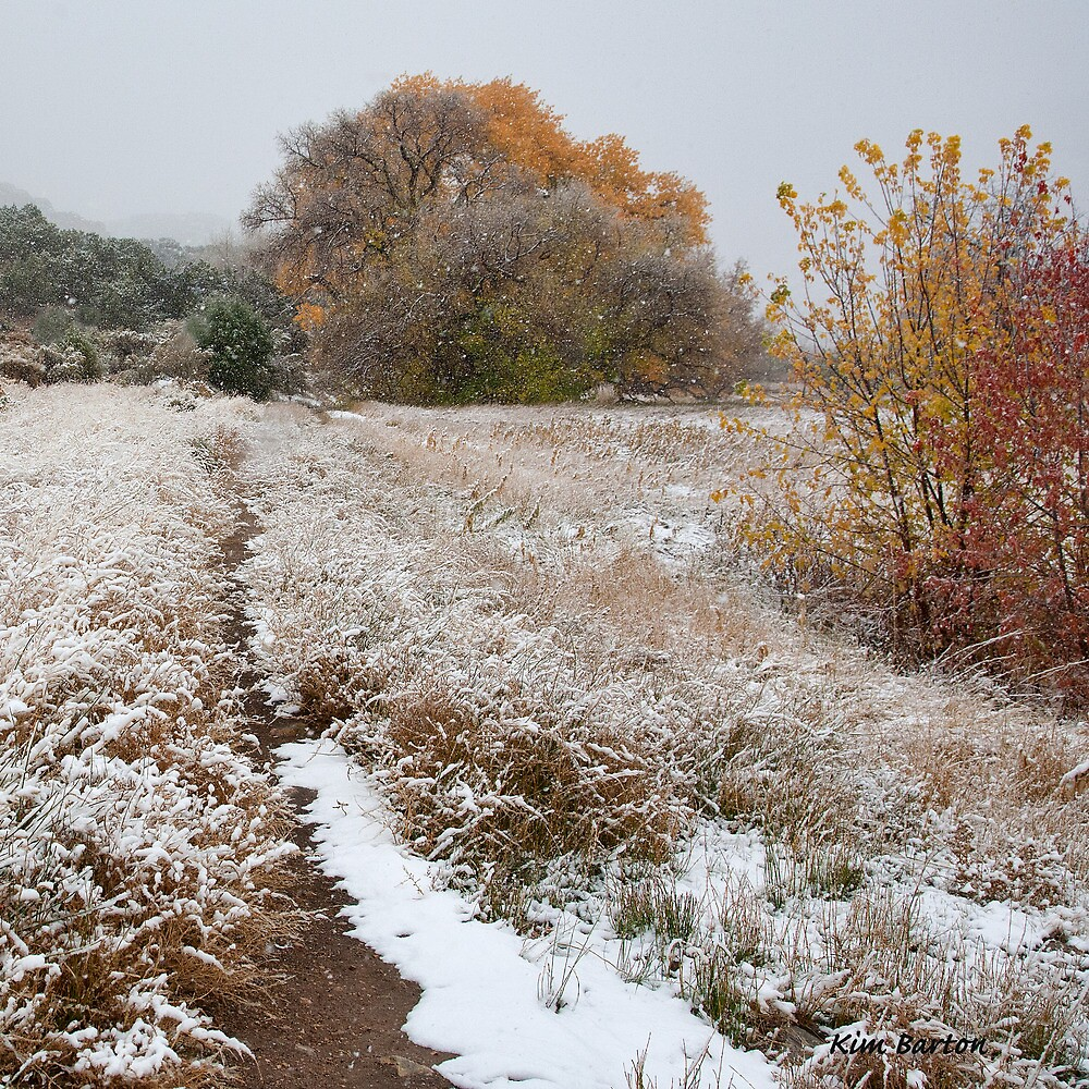 Trail to Hog Canyon by Kim Barton