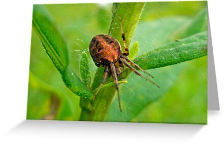 Genus Araneus Orb Weaver Spider - Brown and Orange by MotherNature