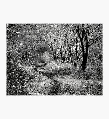 Walk Awhile Photographic Print
