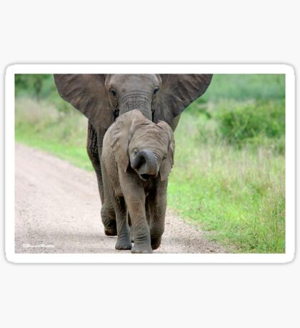 I CAN'T WALK FASTER! THE AFRICAN ELEPHANT – Loxodonta Africana - Afrika Olifant Sticker