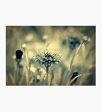 """""""Dreaming Fields of Flowers """" Photographic Print"""