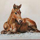 Jackie's Foal by Norah Jones