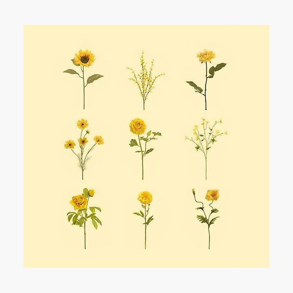 Yellow Flowers Aesthetic Photographic Print