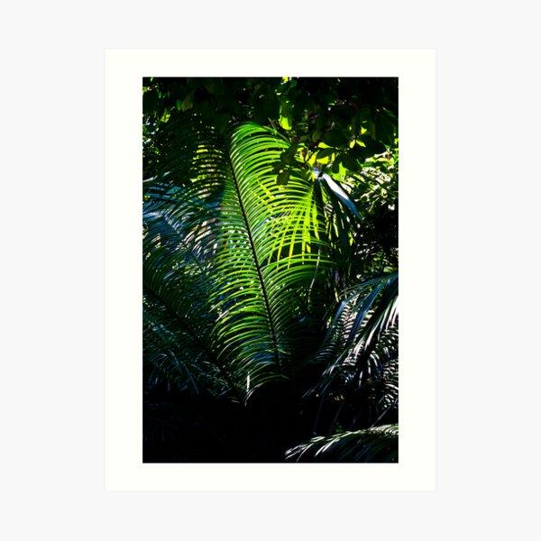Queens Park Palm Art Print