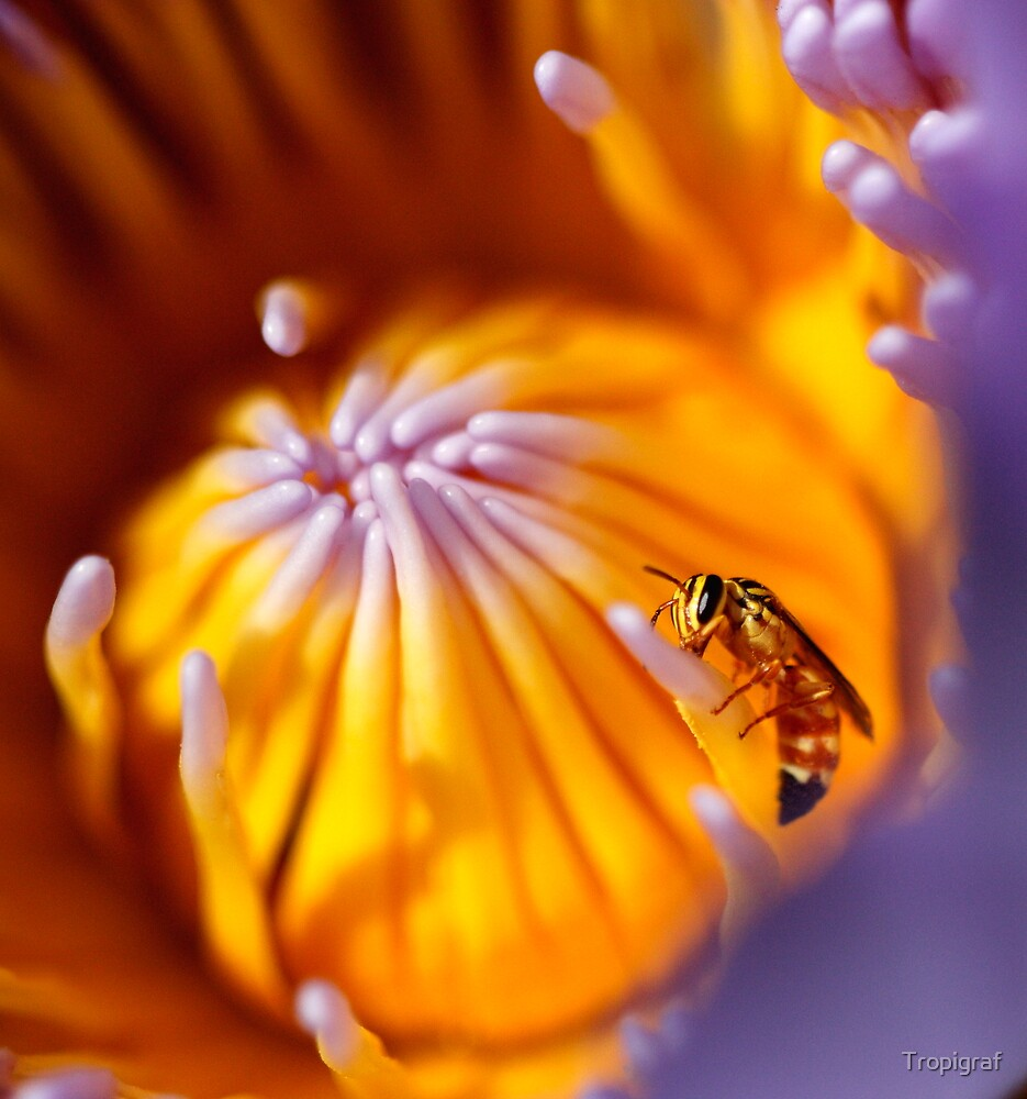 Lily Wasp by Tropigraf