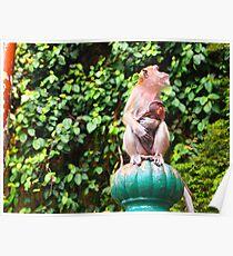 Cynomolgus monkey 4 Poster