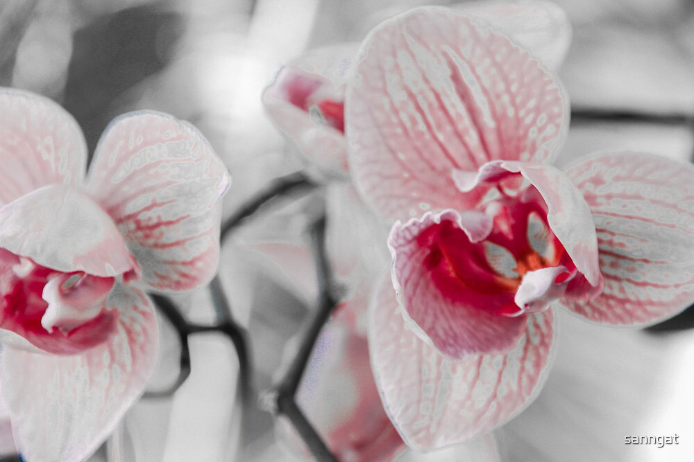 orchids by sanngat