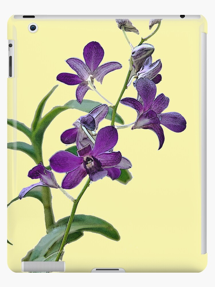 Purple Cymbidium Orchids for iPad by photorolandi