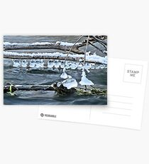 Ice Bells over Rock Creek, Twin Falls, Idaho, USA Postcards