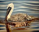Juvenile Pelican by Phyllis Beiser