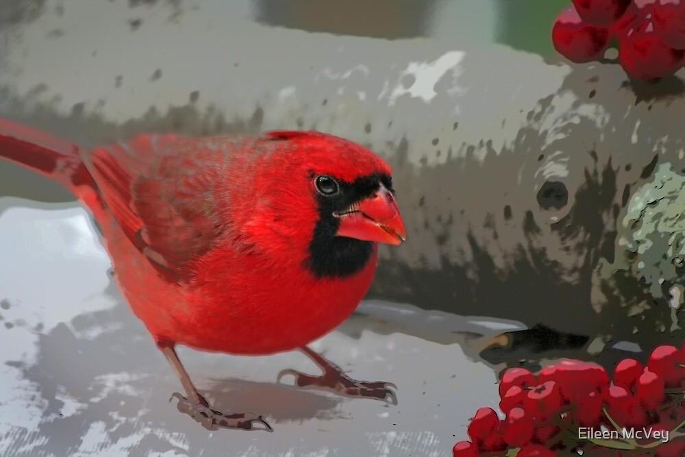 The Cardinal by Eileen McVey