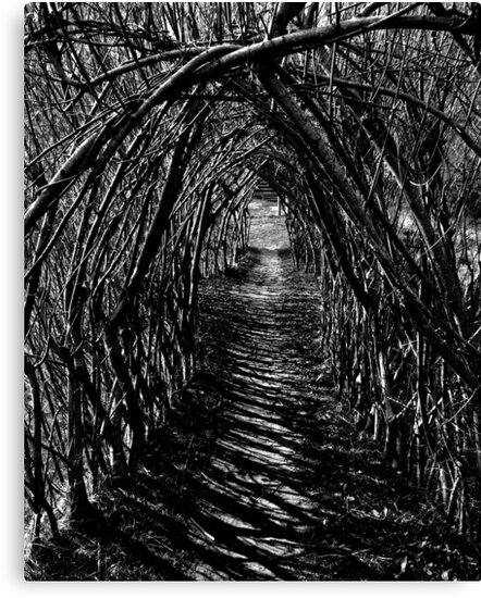 Willow Arch. by Roly01