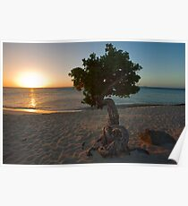 Tree and Sunset Poster