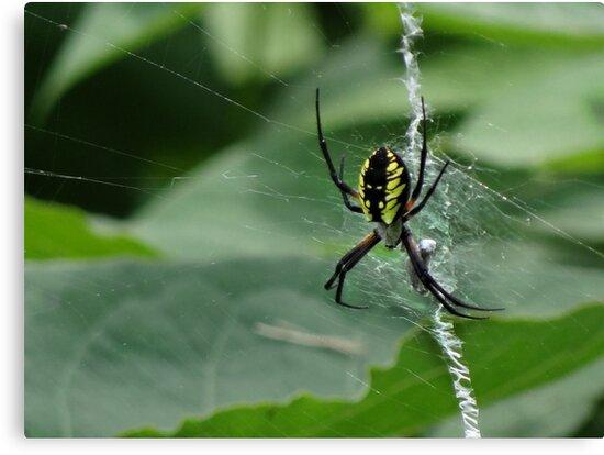 Web Weaver by vigor