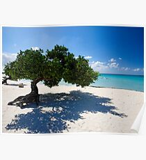 Eagle Beach Divi Tree Poster