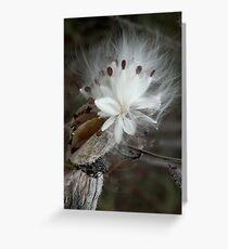 Milkweed Star Greeting Card