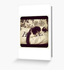 Cat's Life Greeting Card