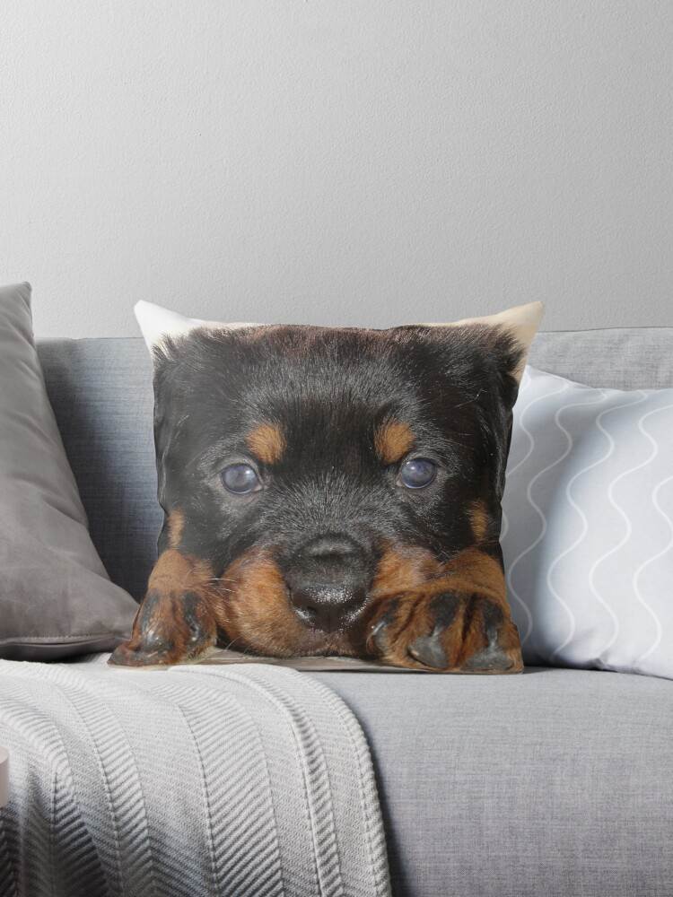 Female Rottweiler Puppy, Head Resting Between Paws by taiche