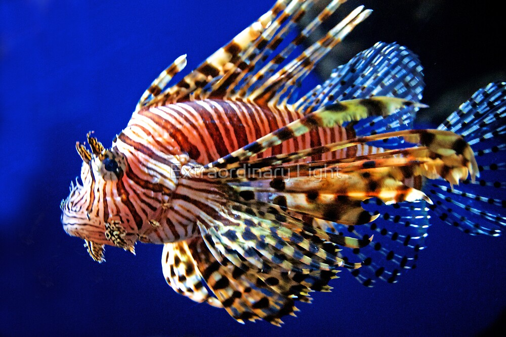 Psychedelic Fish #2 by Renee Hubbard Fine Art Photography