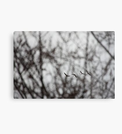 Sandhill Cranes in Whitefish Bay Wisconsin Metal Print
